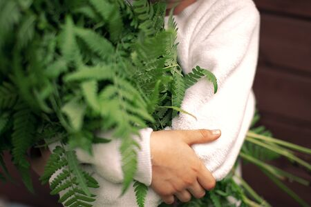 Armful of fern in the hands of a child ecology adventure, nature conservation Reklamní fotografie