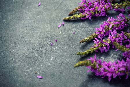 Flowers on Rustic Textured, summer flowers willow-herb Reklamní fotografie
