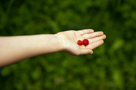 Child hands with raspberries, healthy food concept for kids