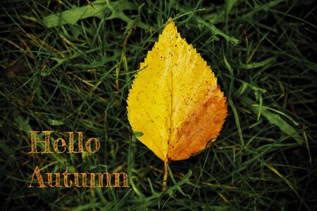 Hello autumn leaves concept of the beginning of the school year Reklamní fotografie