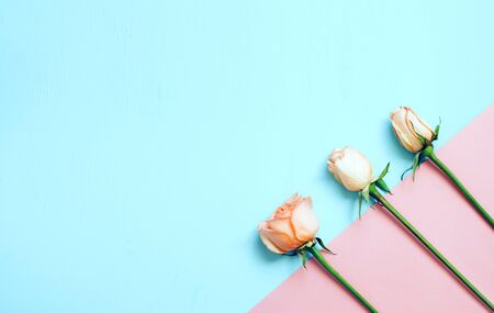 Dried rose flowers on blue and pink background. Flat lay, top view. Copy space for text. Stockfoto