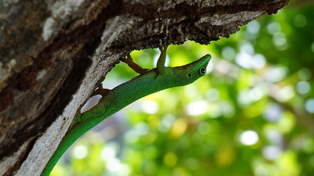 Lizard. Head down Stock Photo