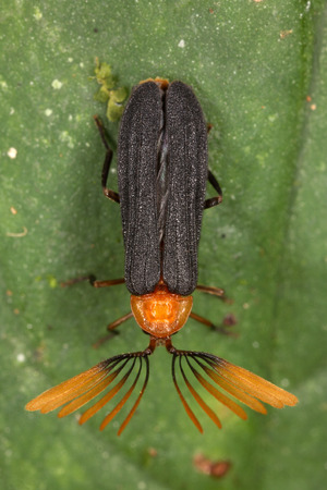 a wonderful world: Tropical beetle