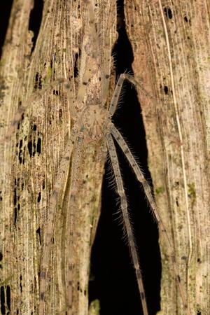 camouflaged: camouflaged spider