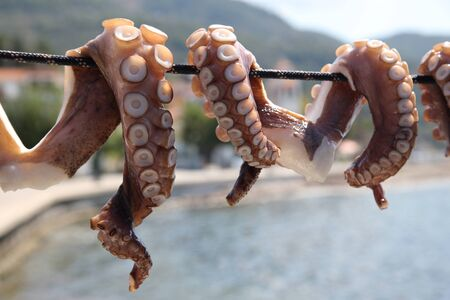 Pieces of an octopus are dried in the open air under the sun. Mediterranean Sea, South of Europe, Greece, Skopelos Island. Stockfoto
