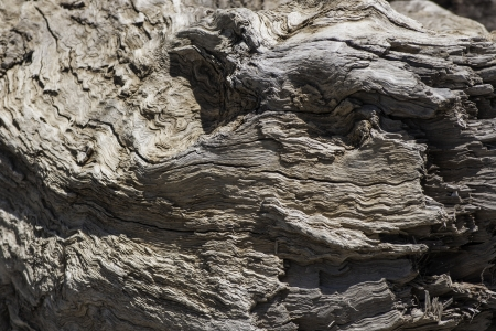 weald: Ancient wood trunk Stock Photo