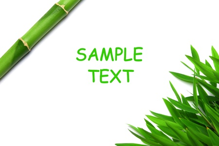 Bamboo leaves and a steam Stock Photo - 10555999