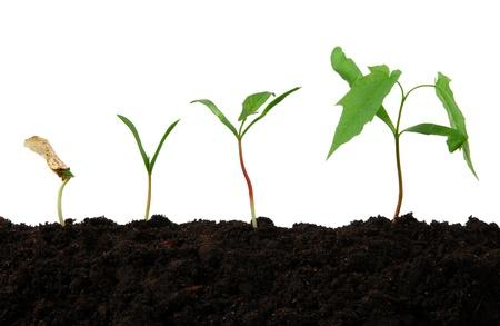 verhogen: Groei stadia van een kleine boom Stockfoto