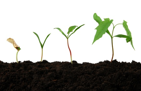 seeding: Growth stages of a small tree  Stock Photo