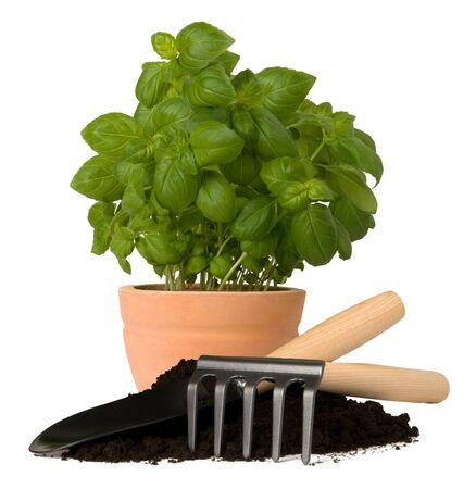 plant pots: Spring gardening