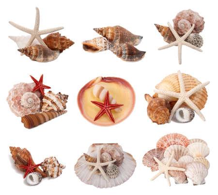 Seashells collection isolated on white background  photo