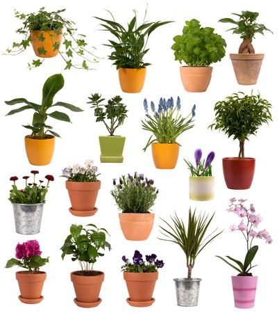 Flowers and plants in pots isolated on white photo