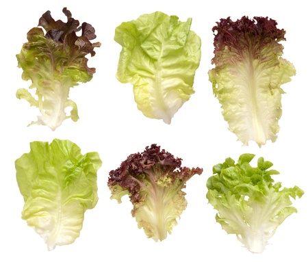 Lettuce leaves isolated on white background  photo