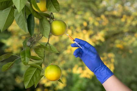 genetically: Genetically modified fruit Stock Photo