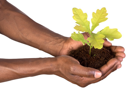 dark skinned: Hands holding a small plant