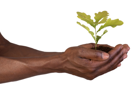 Hands holding a small plant Stock Photo - 29949251
