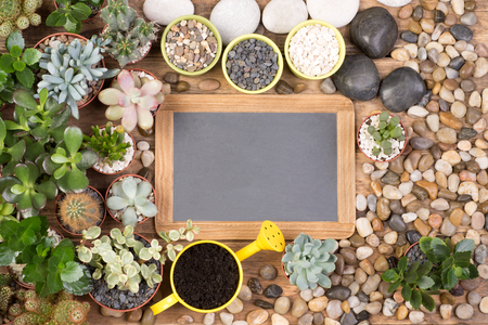 Blank, small blackboard surrounded by succulent plants and stones