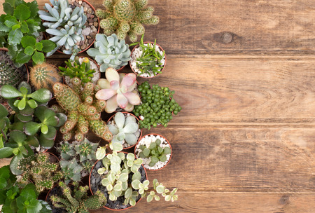 Cute succulent plants on wooden background with copy space, top view Stock Photo