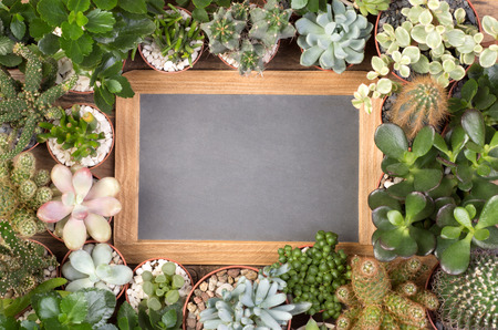 Blank, small blackboard surrounded by succulent plants