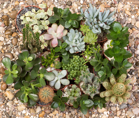 Cute succulent plants top view Stock Photo