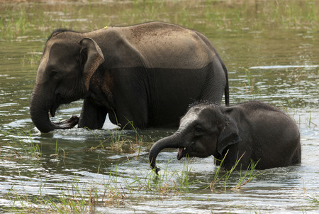 Familie van olifanten kwam drinken