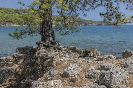 The coast of the ancient city of Lycia. Historical landmark Phaselis (Faselis) - the city of ancient Lycia, in the territory of modern Turkey, Antalya.