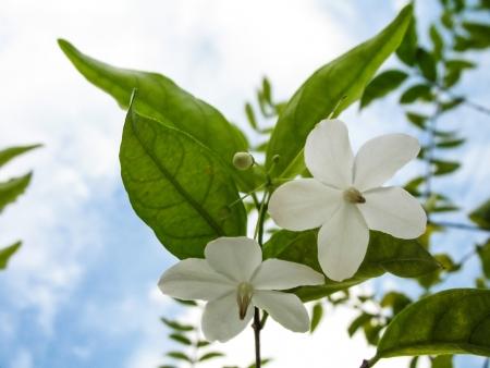 beautyful: beautyful flower 2