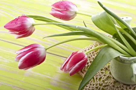 Pink and white tulips in a ceramic watering can photo