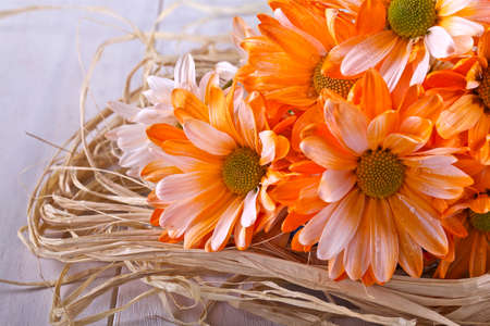 Margarita naranja y paja sobre un fondo claro Foto de archivo - 26664387