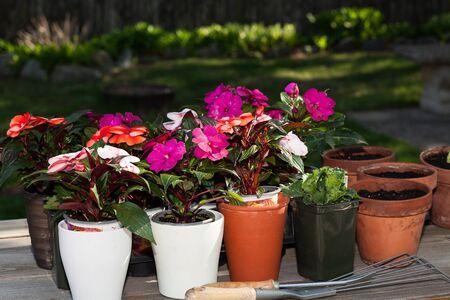 Flores listos para la siembra de primavera Foto de archivo - 36111871