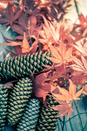 Brown pine cones and colorful autumnal leaves , selective focus Stok Fotoğraf