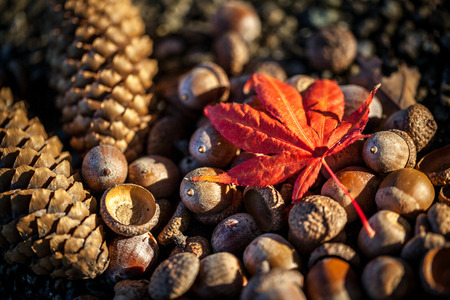 Brown pine cones, acorns and autumnal leaf on a stone background selective focus Stok Fotoğraf