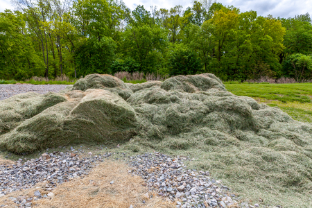 Green dry grass on a meadow