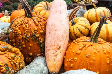 Pumpkins and squash, various of sizes and colors.