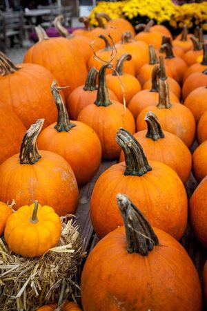 Ripe pumpkins in a row