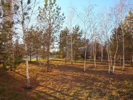 falltime: Falltime sunshine in the park