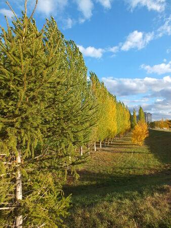 falltime: An autumn landscape