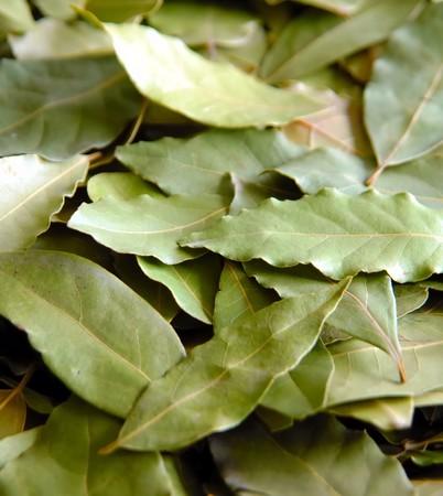 dafne: Daphne albero foglie in gruppo