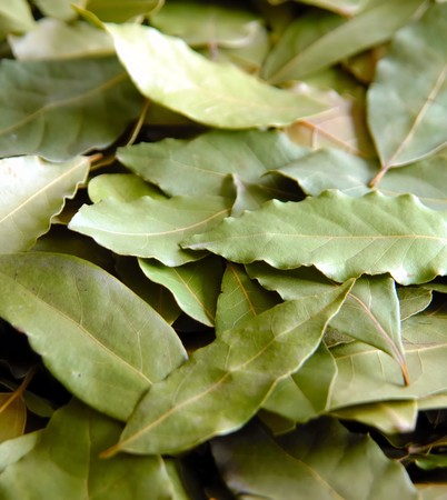daphne: daphne tree leafs in group Stock Photo