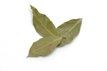 laurus nobilis leafs isolated at white background Stock Photo - 7485596