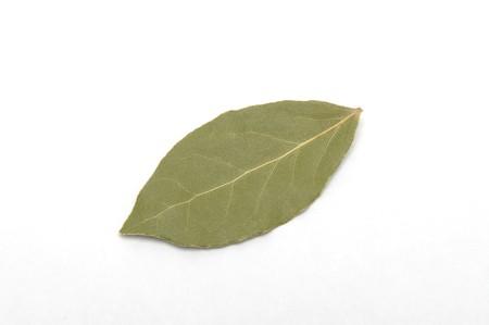 laurus nobilis leaf isolated at white background photo