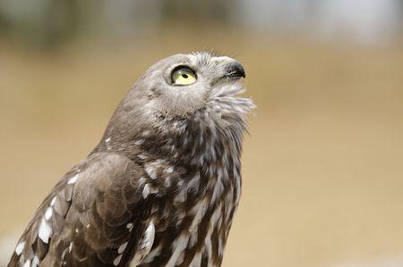 Bird of prey Banco de Imagens