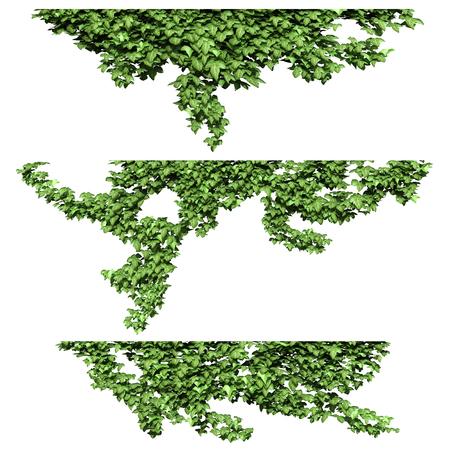 in common: Ivy.3d rendering. Stock Photo