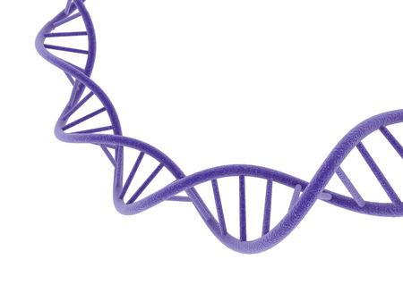 cromosoma: ADN púrpura.