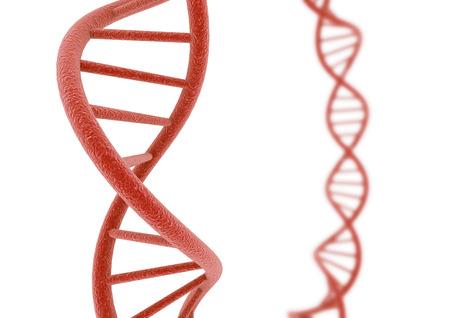 deoxyribonucleic acid: Red DNA.
