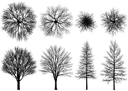 裸の木。ベクトルの木は、白い背景で隔離。