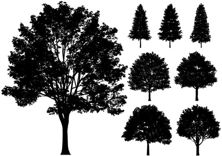 Vector trees isolated on a white background. Illustration