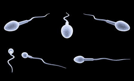 sperm cell isolated on black background.