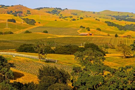 Vineyards in Napa Valley at sunset Stock Photo
