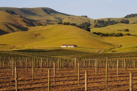 Napa Valley vineyard at sunset photo